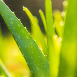 Ofertas Planta Artificial