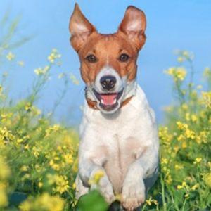 Ofertas Mascotas