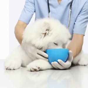 Pienso veterinario