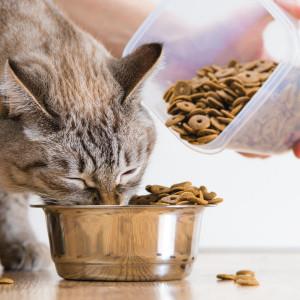 Alimentación veterinaria para gato