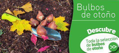 Bulbos de otono verdecora - Bulbos de otono ...