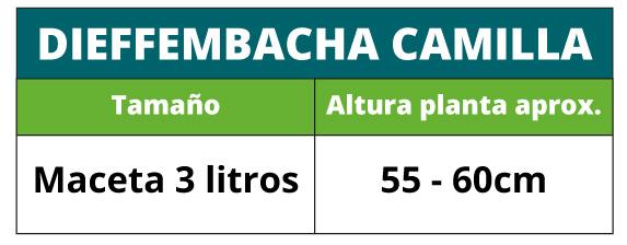 Altura aproximada de la planta dieffembachia camilla en maceta de 3 litros