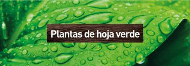 Planta Verdes